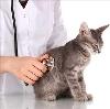Ветеринарные клиники в Бурмакино